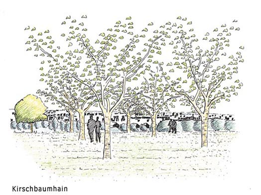 Grove of cherry trees, © Umweltamt Frankfurt am Main
